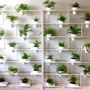 Green Wall Potted Plants Office Space Christine Beattie Pynari Landscaping